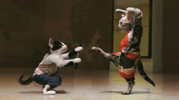 Karatê Cat