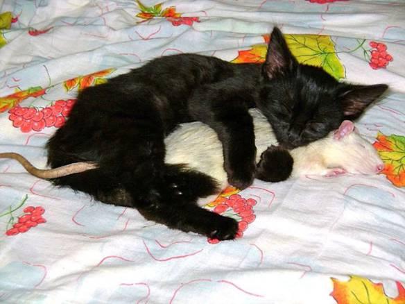 Namore Alguém Que Durma Assim com Você