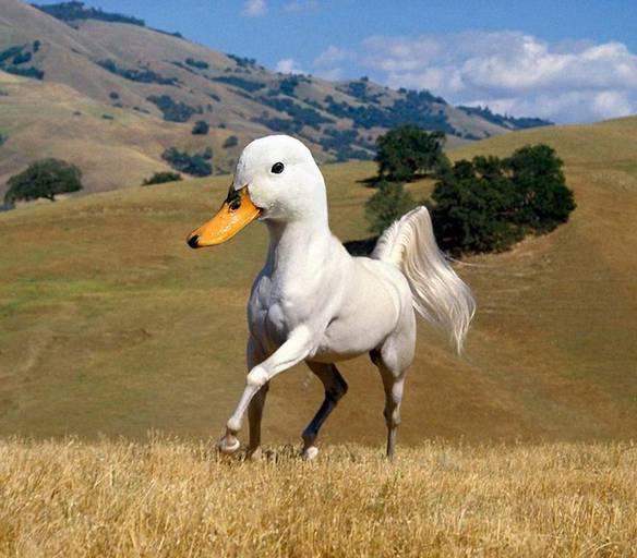 Um Cavalo Diferente