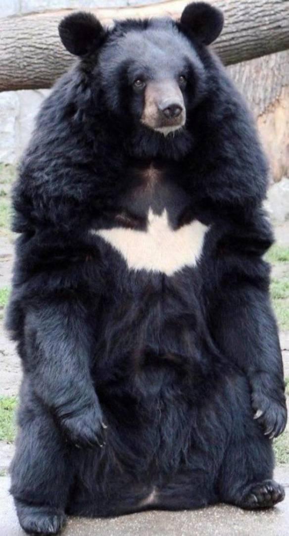 Ele É o Batman