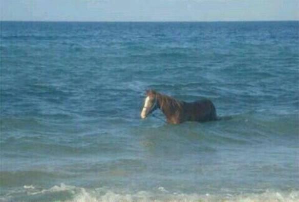 Pra Quem Nunca Viu Um Cavalo Marinho