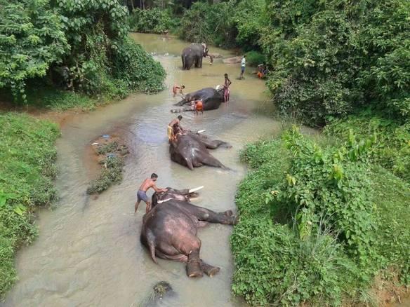 Spa de Elefantes