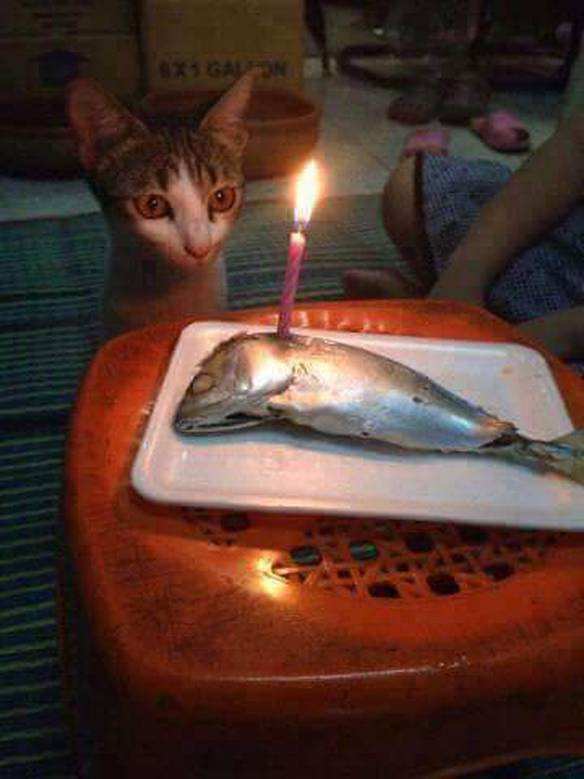 Aniversário do Gato ou Velório do Peixe?