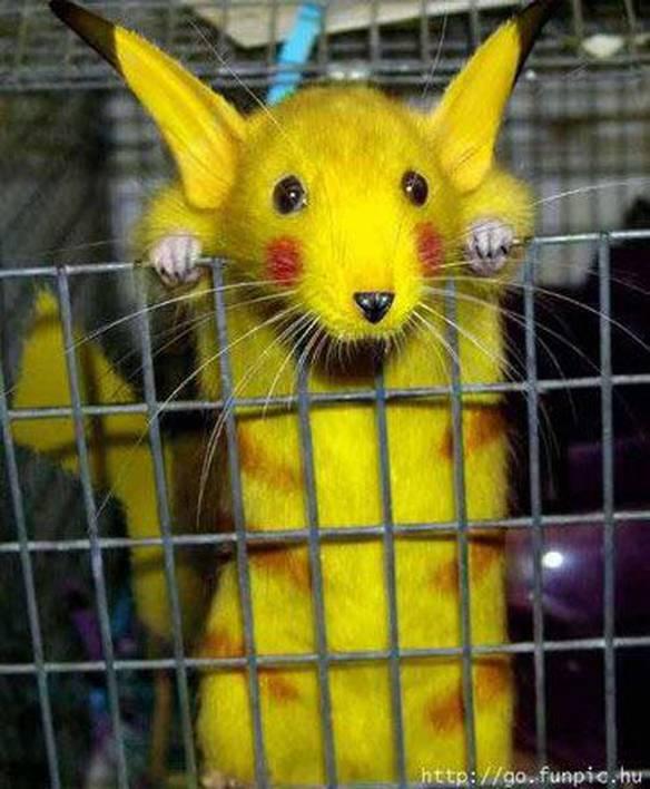 Pikachu é Real
