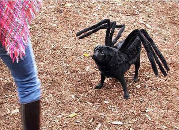 Cão Aranha