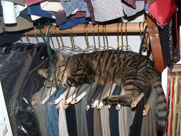 Gato Encabidado