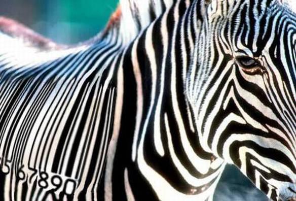 Código de Zebras
