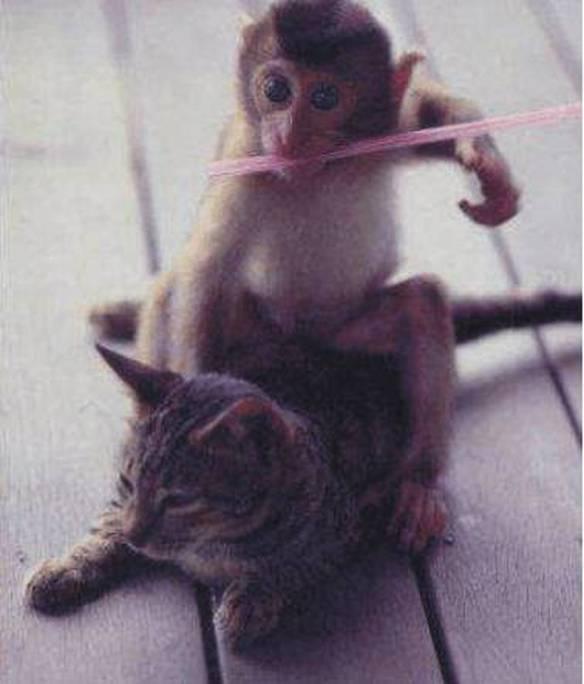 Macaco Assassino