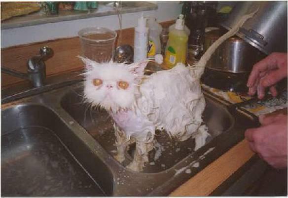 Lavando o Gato