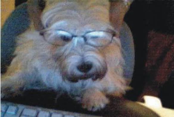 Cachorro Intelectual