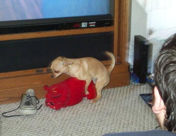Cachorro Com Problema de Visão