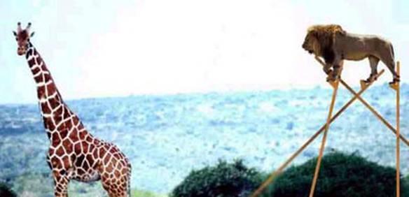Para Caçar Girafas