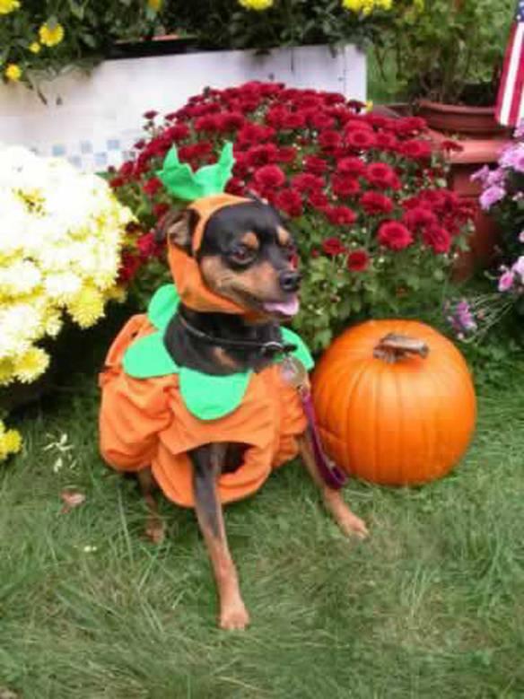 Preparado Para o Halloween