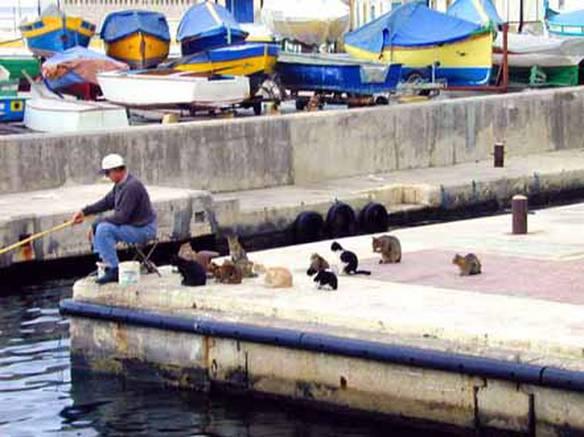 Esperando o Resultado da Pesca