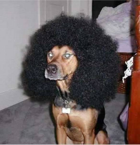 Black Power Dog