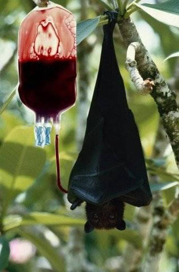 Morcego Moderno