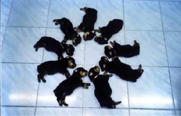 Cães Treinados Dormindo