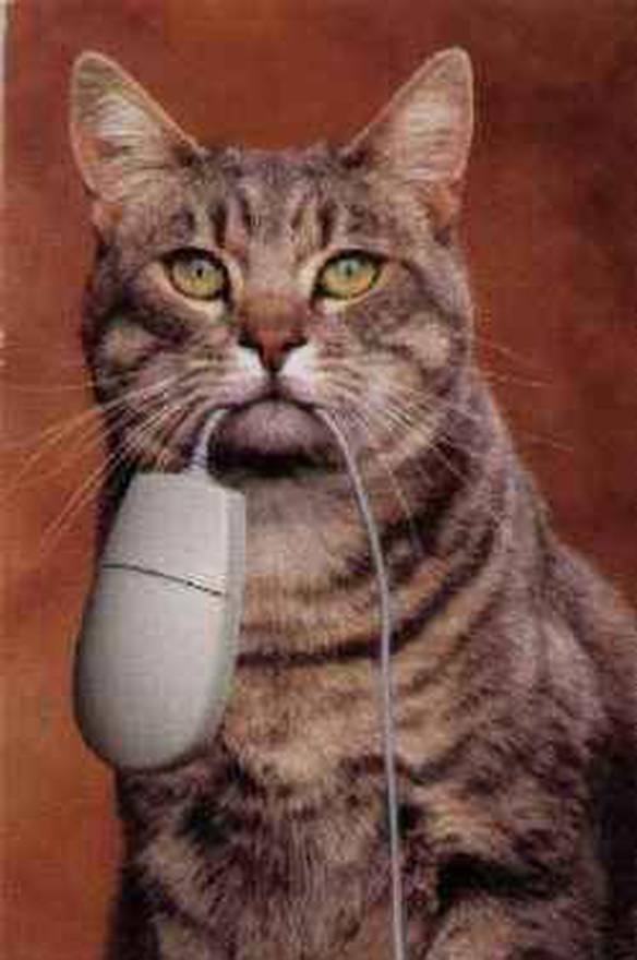 O Gato e Seu Rato