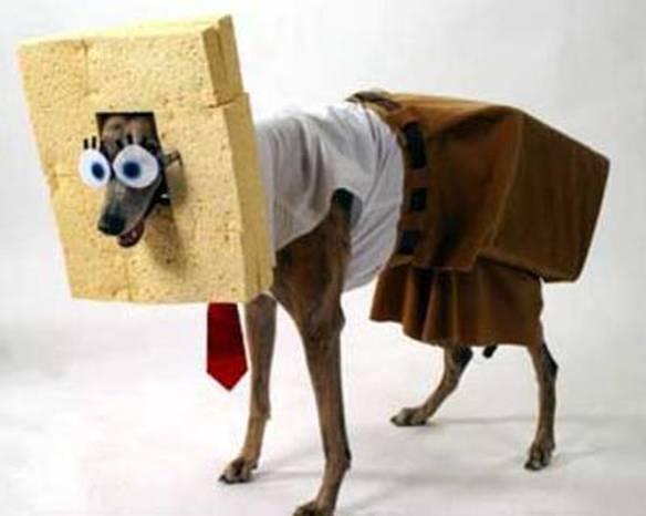 Cachorro do Bob Esponja