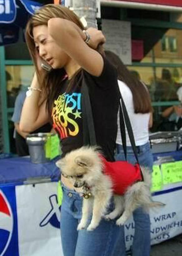 Levando o Cachorro Para Passear