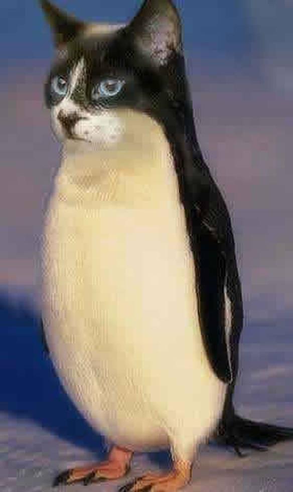Gatuim, ou será Pingato?