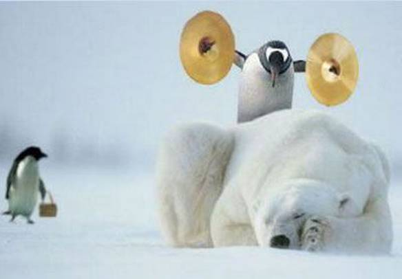 Pinguins Pertubadores
