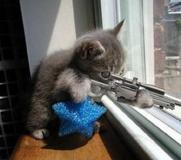 Gato Assassino