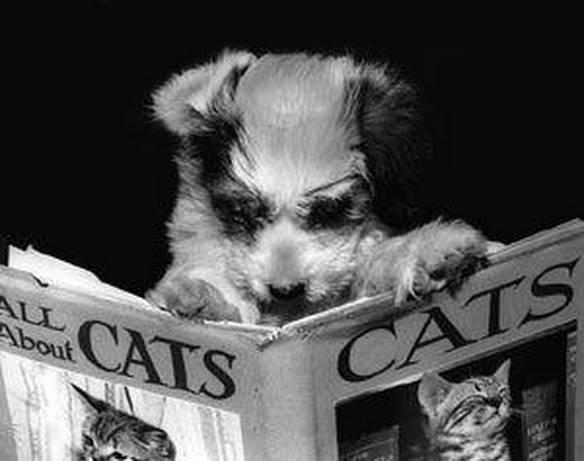 Cão Informado