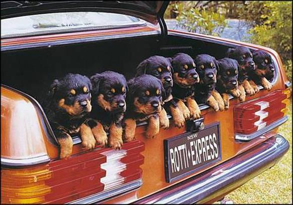 Porta-cães