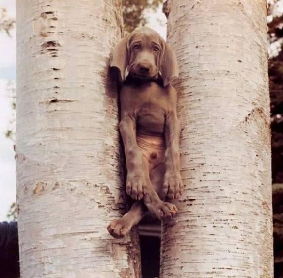 Cachorro Pendurado