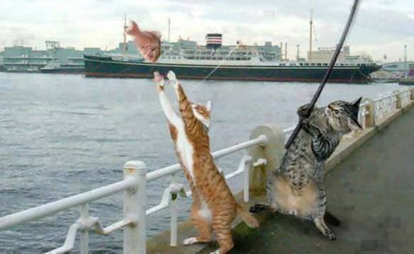A Pescaria Foi Boa