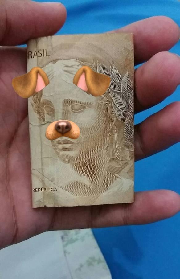 Minha Raça de Cachorro Favorita
