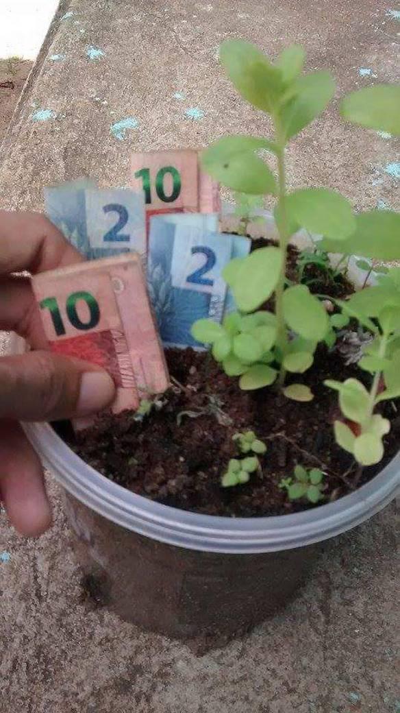 Plantando Agora Para Colher Mais Depois