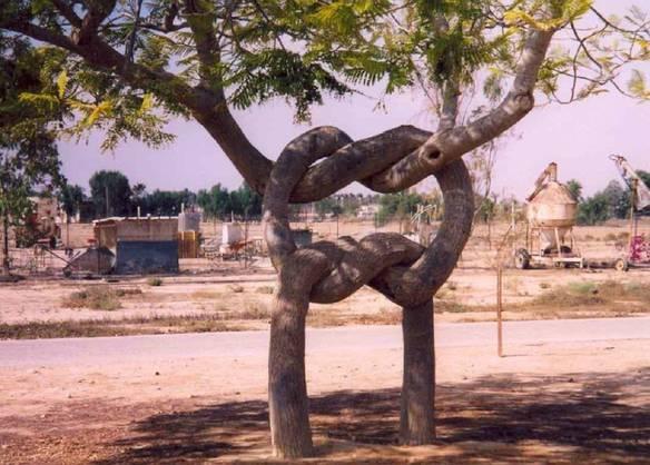 Abraço de Árvores